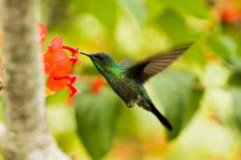 green and black hummingbird