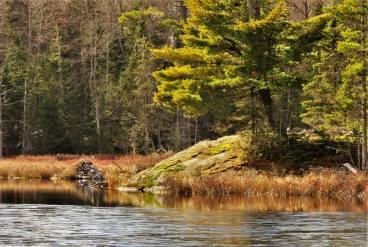 A beaver house of course! - Image Credit Nancy Haun